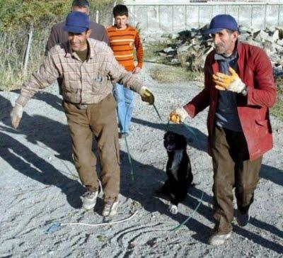 6 Η Τουρκία της Ντροπής   Σοκαριστικές φωτογραφίες απο εγκλήματα κατά αδέσποτων σκύλων!!