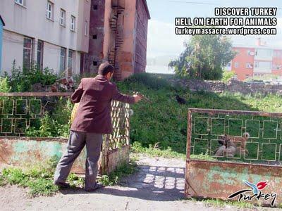 kars1 Η Τουρκία της Ντροπής   Σοκαριστικές φωτογραφίες απο εγκλήματα κατά αδέσποτων σκύλων!!