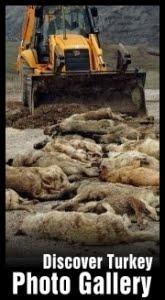 sag Η Τουρκία της Ντροπής   Σοκαριστικές φωτογραφίες απο εγκλήματα κατά αδέσποτων σκύλων!!