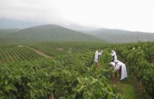 Macedonian Wine country from Macedonia (Northern Greece)