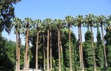 350px National Gardens 225x145 Αυστραλία: Ρεκόρ επισκεπτών για την έκθεση «2.000 χρόνια θησαυρών του Μεγάλου Αλεξάνδρου»