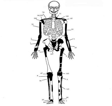 3 ΥΠΠΟΑ: Μελέτη Σκελετικών Καταλοίπων Ταφικού Μνημείου, Λόφου Καστά