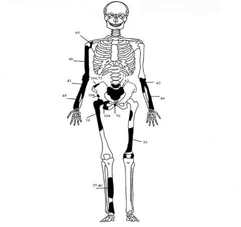 5 ΥΠΠΟΑ: Μελέτη Σκελετικών Καταλοίπων Ταφικού Μνημείου, Λόφου Καστά